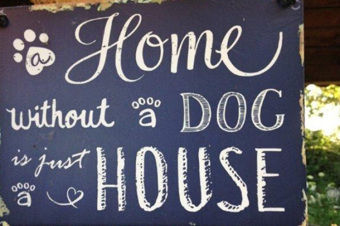 Home without a dog is just a house